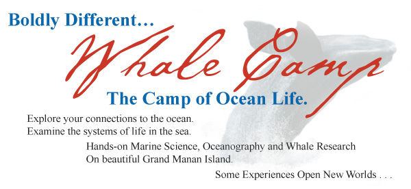 Marine-Biology-Camp